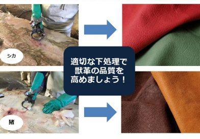 5/18 MATAGIプロジェクト 獣脂・獣肉除去実技講座 参加者募集のご案内