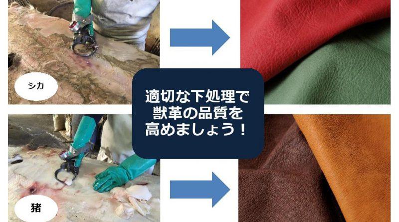 MATAGIプロジェクト 獣脂獣肉除去講座